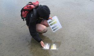 Eine Wissenschaftlerin ermittelt Sedimentfarben JKohlus-LKN-SH