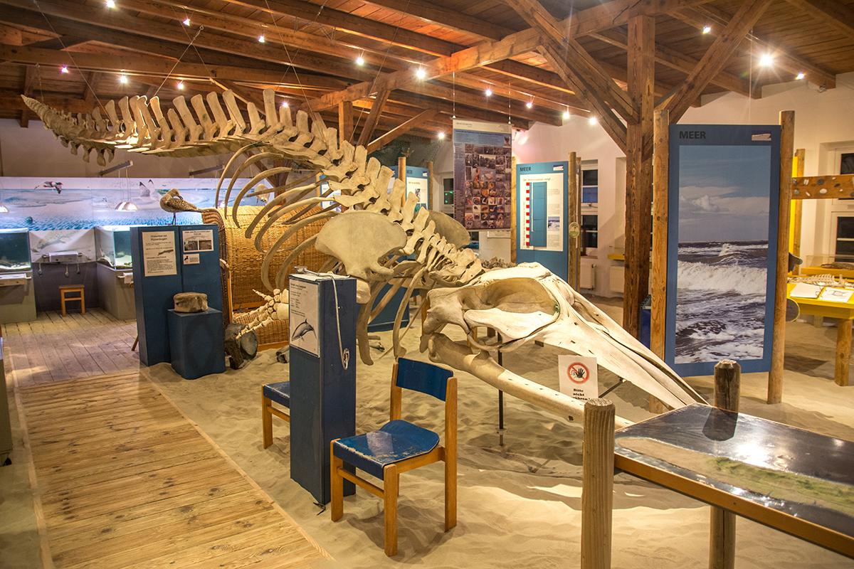 Nationalpark-Haus Juist Ausstellung