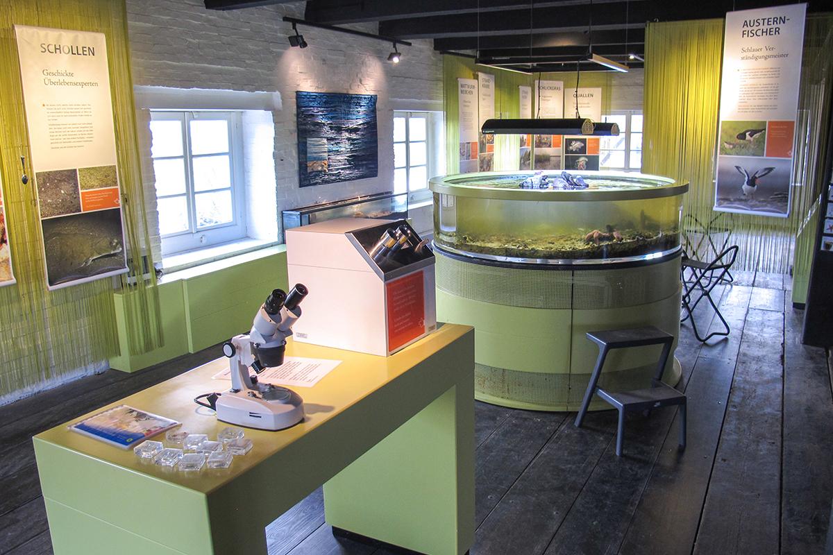 Nationalparkhaus Carolinensiel Ausstellung
