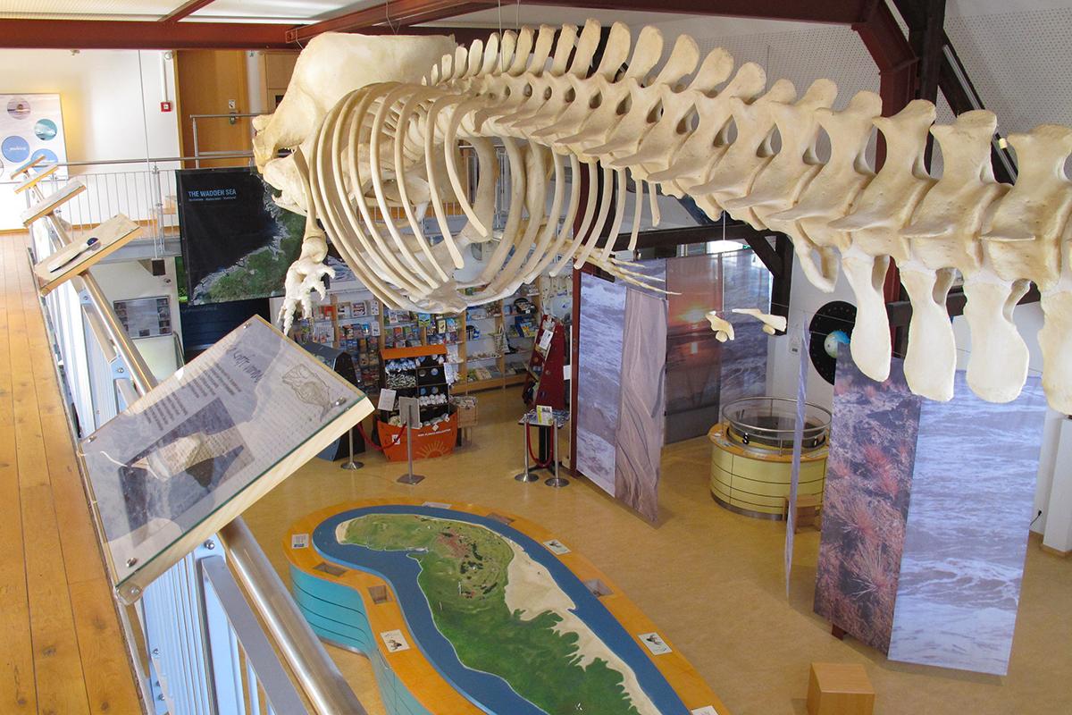 Nationalpark-Haus Wittbülten, Ausstellung