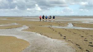 Geführte Wanderungen auf dem Meeresboden können Einheimische zum Welterbe-Geburtstag des Wattenmeers kostenlos unternehmen.
