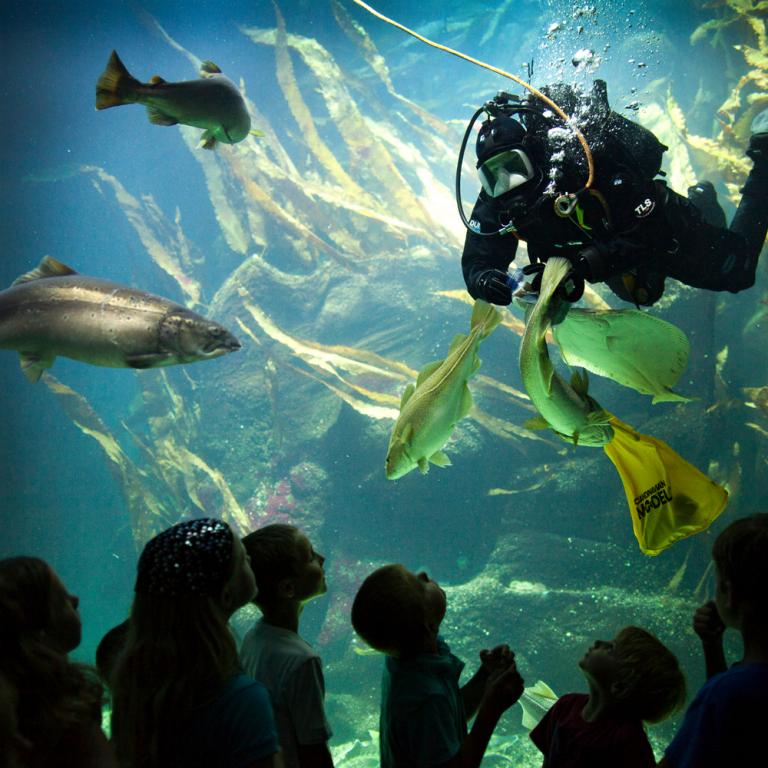 Aquarium im Multimar Wattforum Tönning