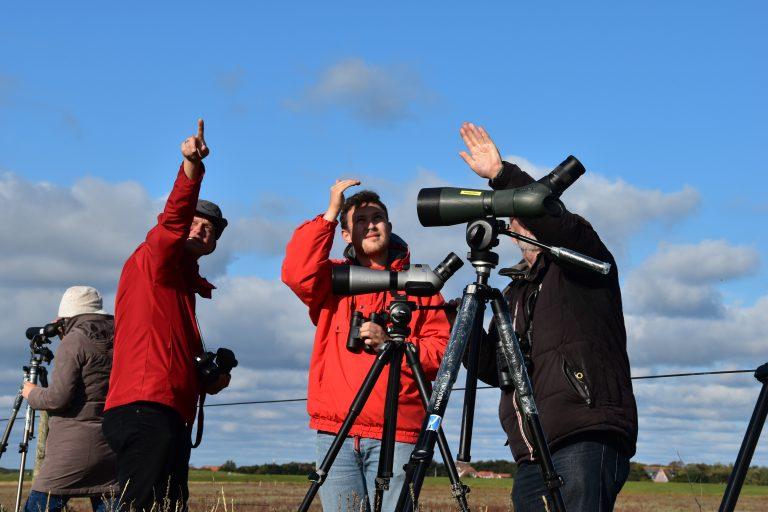 Vogelbeobachtung Spiekeroog