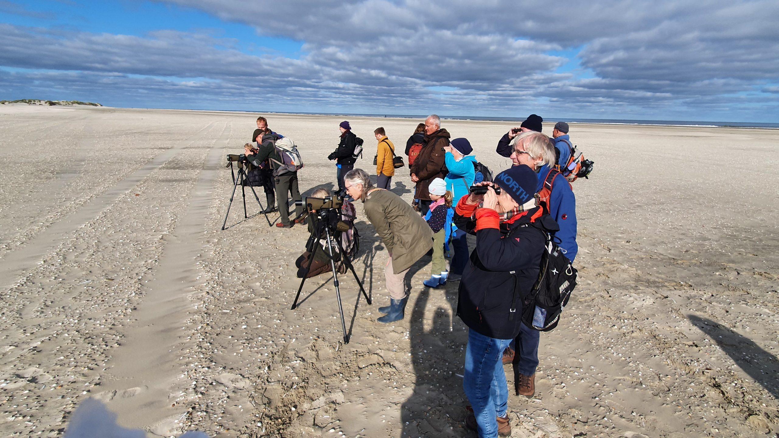 Seevogel-Beobachtung auf Borkum