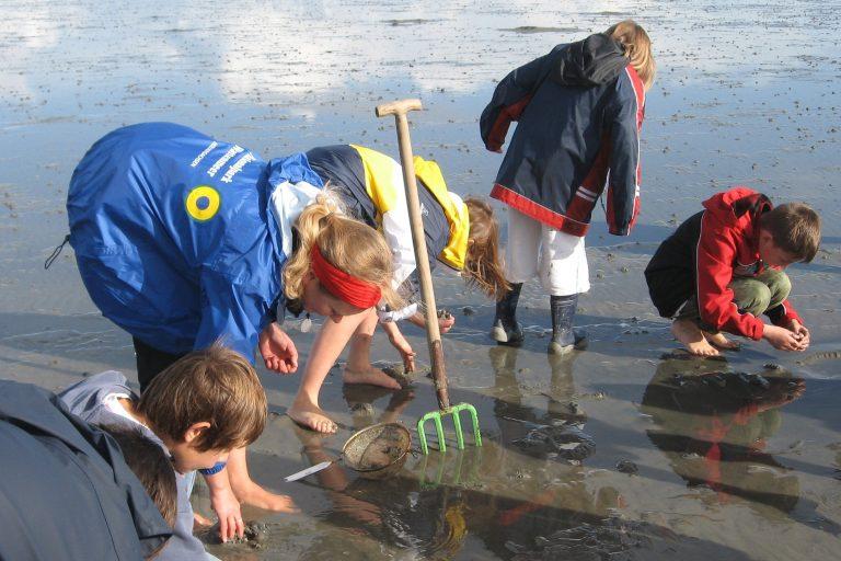 Wattenmeer Besucherzentrum Cuxhaven Wattexkursion
