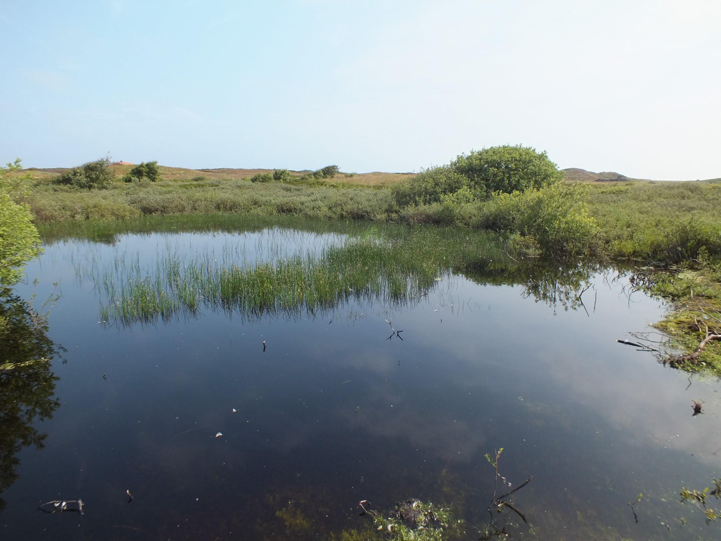 Laichgewässer für Kreuzkröten auf Langeoog