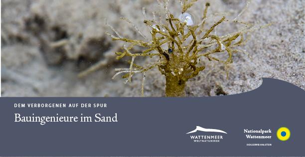 Bauingenieure im Sand