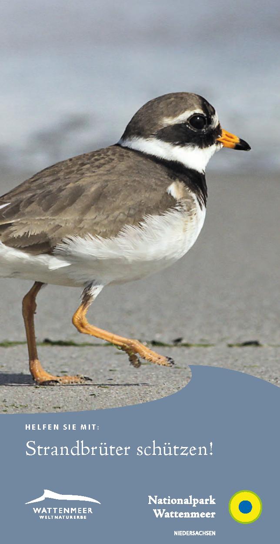 Titel Faltblatt Strandbrüter schützen