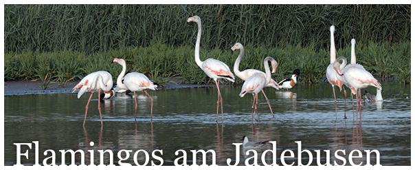 Titel Flamingos