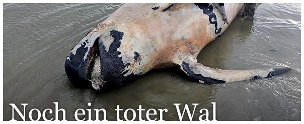 toter-wal