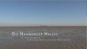 hamburger-hallig