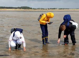 Jugendliche kartieren Seegras im Watt vor Föhr