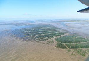 Blick auf die Seegraswiesen nahe Hallig Gröde