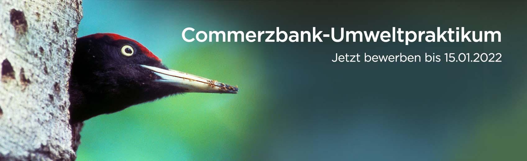 Banner Umweltpraktikum 2022