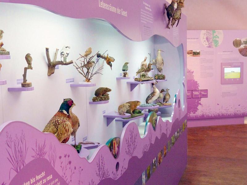 Naturkundemuseum Niebüll