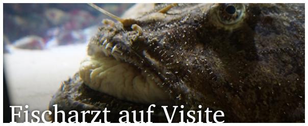Fischarzt auf Visite